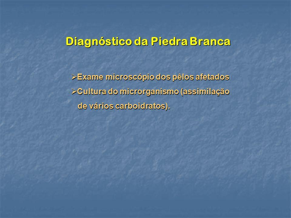 Diagnóstico da Piedra Branca Exame microscópio dos pêlos afetados Exame microscópio dos pêlos afetados Cultura do microrganismo (assimilação Cultura d