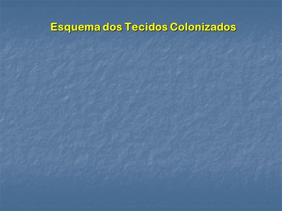 Esquema dos Tecidos Colonizados