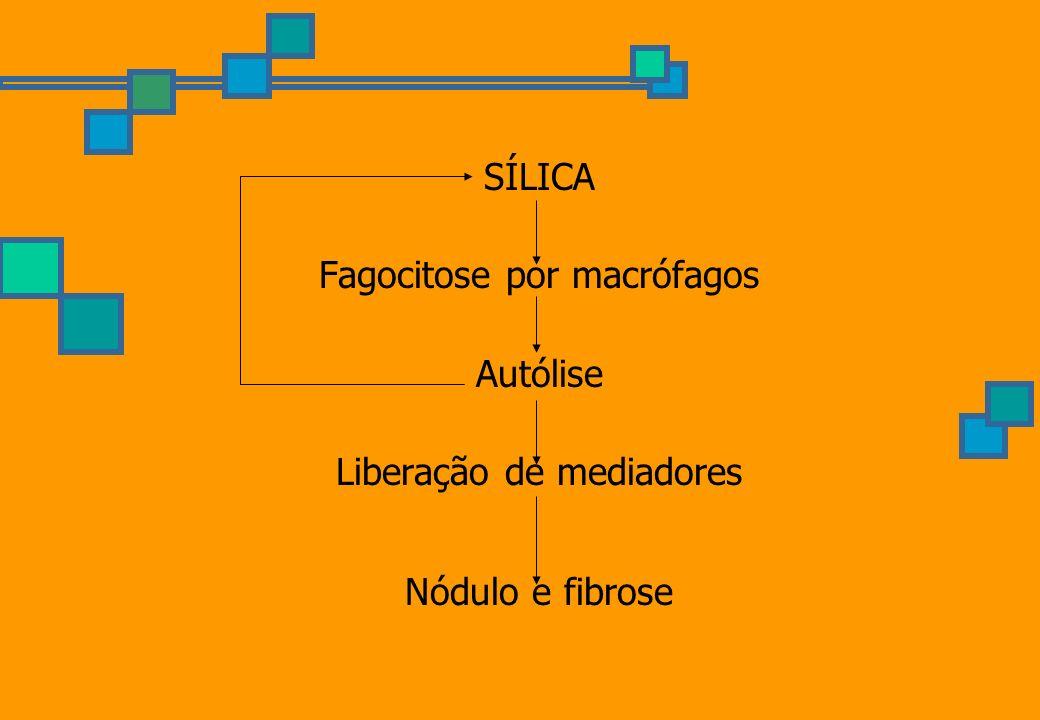 SÍLICA Fagocitose por macrófagos Autólise Liberação de mediadores Nódulo e fibrose