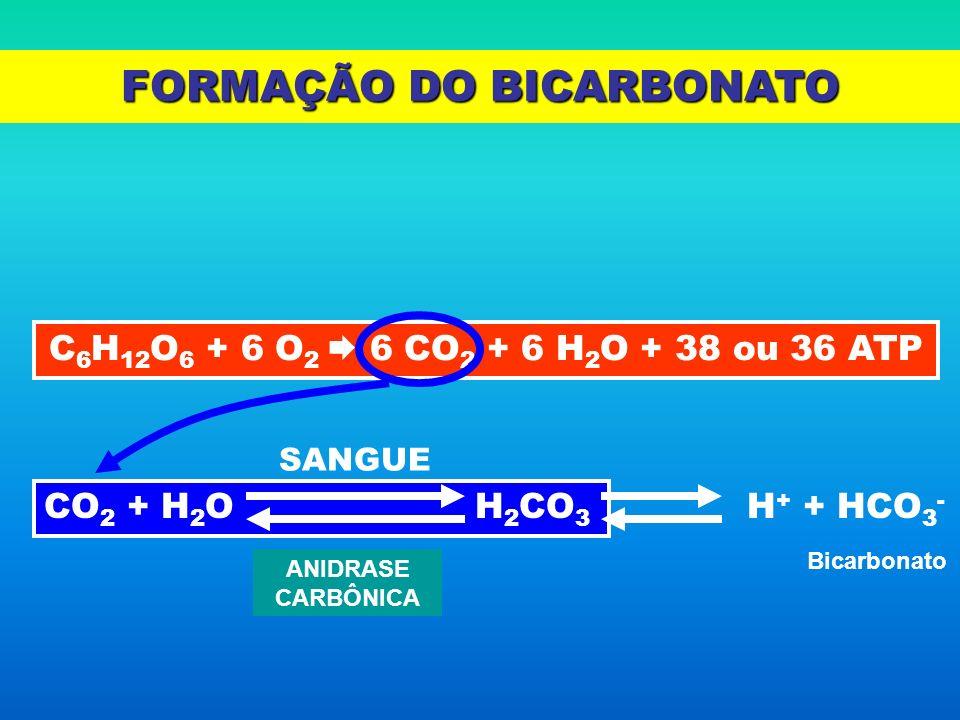 FORMAÇÃO DO BICARBONATO C 6 H 12 O 6 + 6 O 2 6 CO 2 + 6 H 2 O + 38 ou 36 ATP CO 2 + H 2 O H 2 CO 3 ANIDRASE CARBÔNICA SANGUE H + + HCO 3 - Bicarbonato