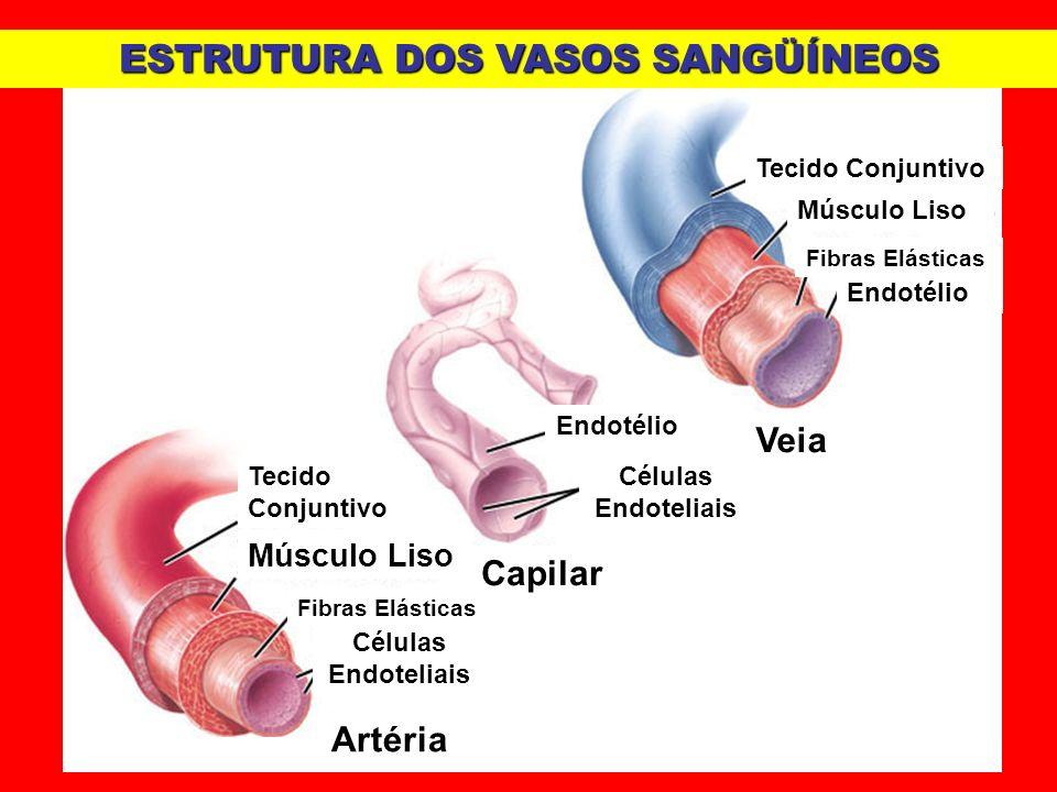 Capilar Veia Endotélio Células Endoteliais Tecido Conjuntivo Células Endoteliais Endotélio Músculo Liso Fibras Elásticas Músculo Liso Artéria ESTRUTUR
