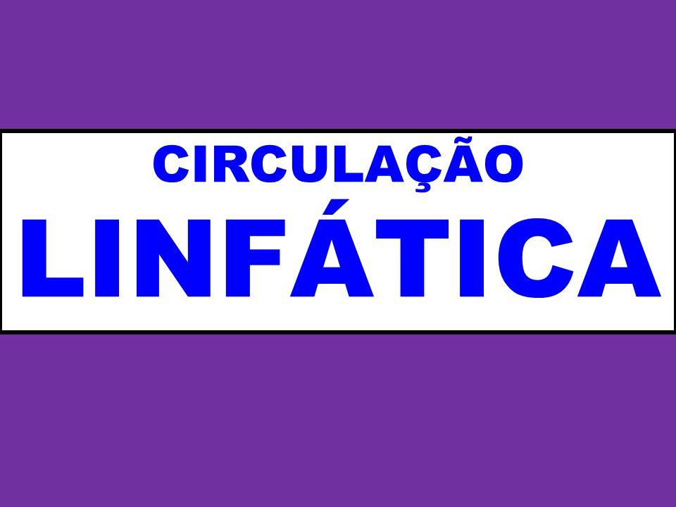 CIRCULAÇÃO LINFÁTICA