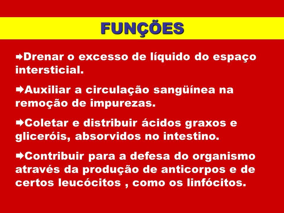 FUNÇÕES Drenar o excesso de líquido do espaço intersticial. Auxiliar a circulação sangüínea na remoção de impurezas. Coletar e distribuir ácidos graxo