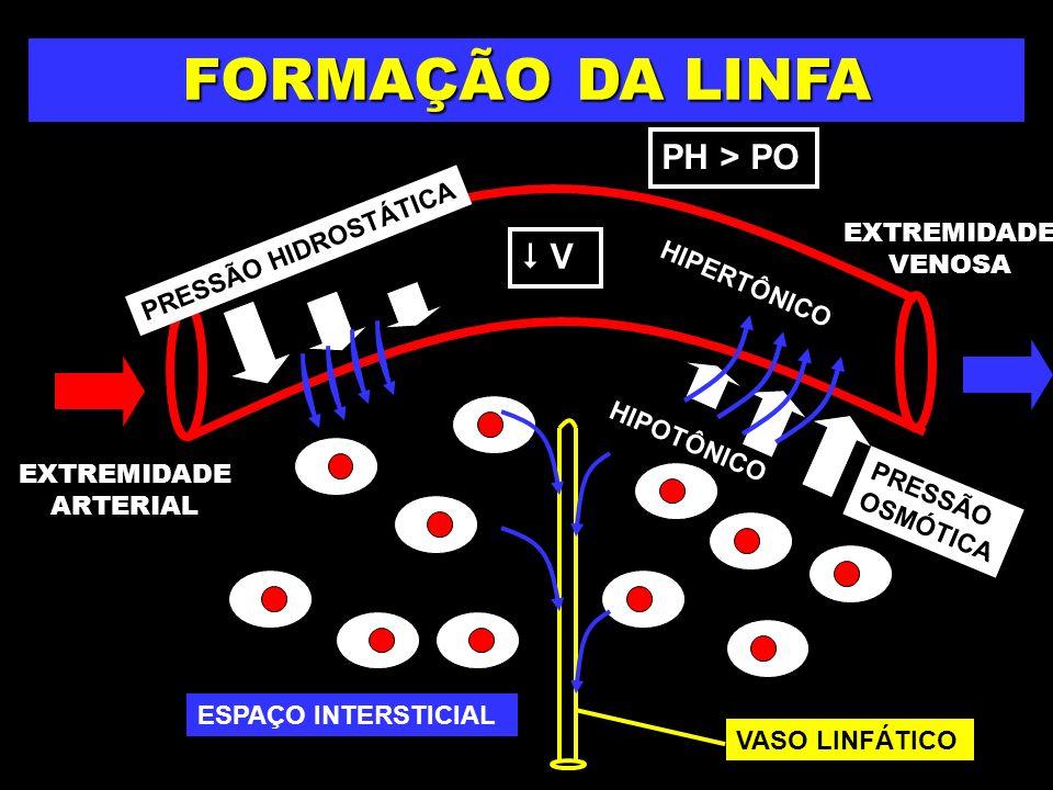 PRESSÃO HIDROSTÁTICA V FORMAÇÃO DA LINFA PRESSÃO OSMÓTICA PH > PO EXTREMIDADE ARTERIAL EXTREMIDADE VENOSA VASO LINFÁTICO HIPERTÔNICO HIPOTÔNICO ESPAÇO