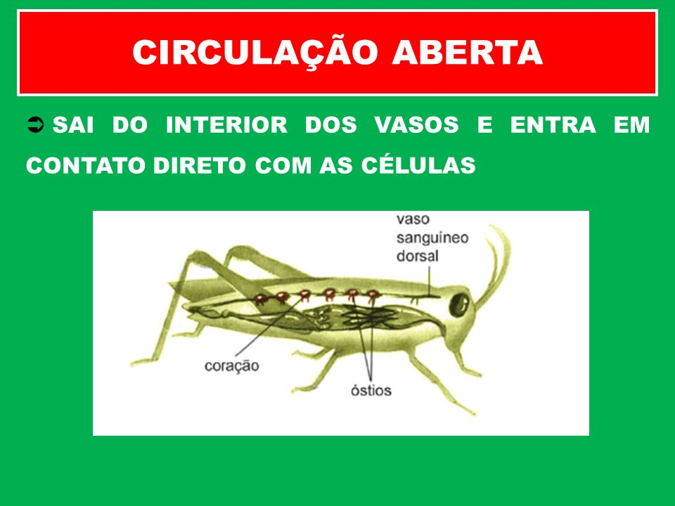 SAI DO INTERIOR DOS VASOS E ENTRA EM CONTATO DIRETO COM AS CÉLULAS CIRCULAÇÃO ABERTA