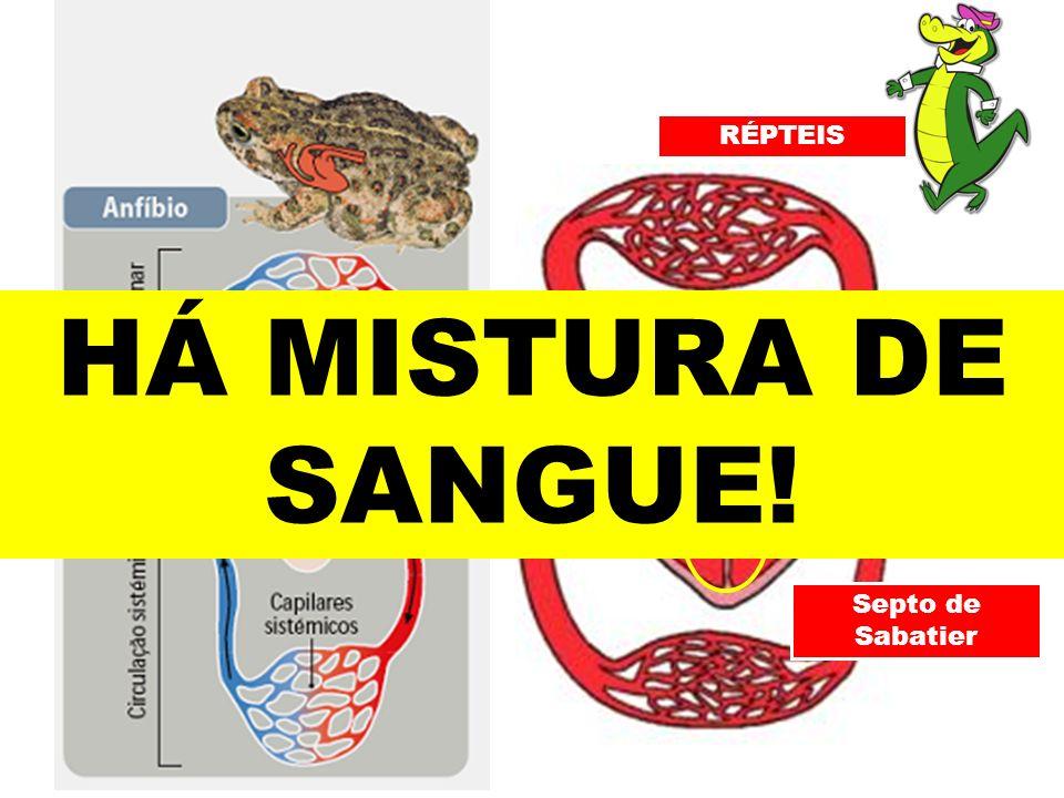 Septo de Sabatier RÉPTEIS HÁ MISTURA DE SANGUE!