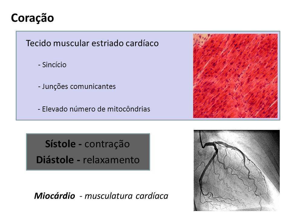 Coração Tecido muscular estriado cardíaco - Sincício - Junções comunicantes - Elevado número de mitocôndrias Miocárdio - musculatura cardíaca Sístole