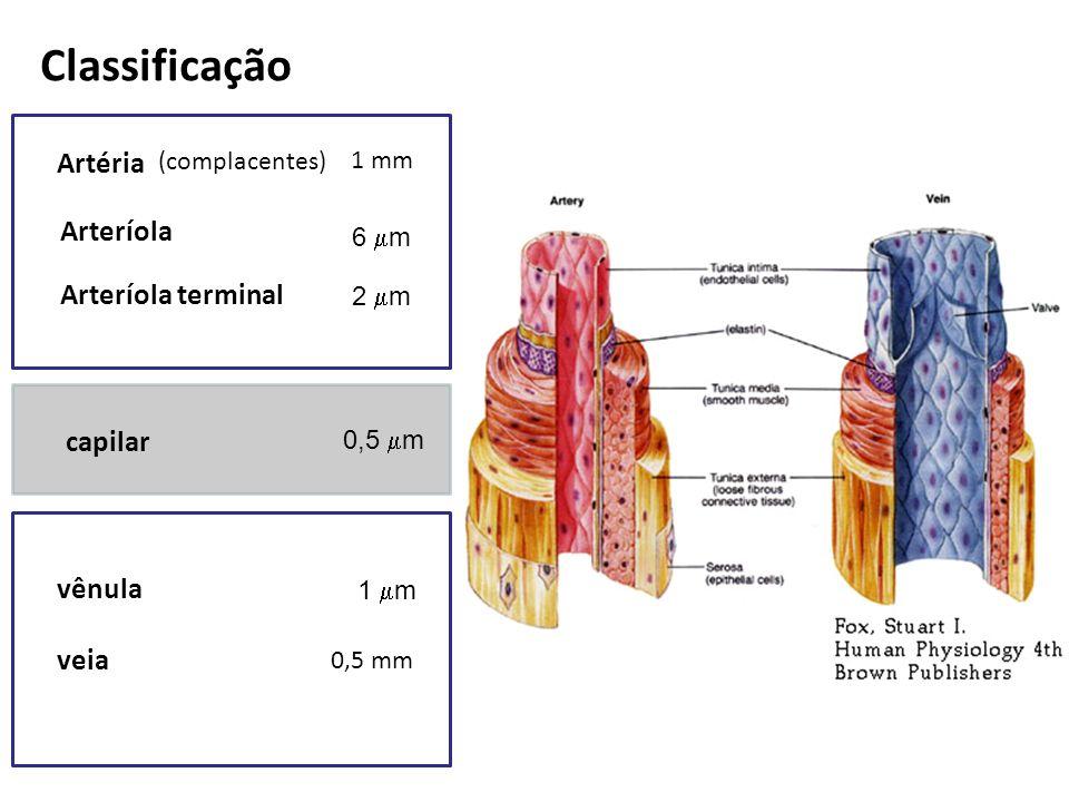 Classificação Artéria Arteríola Arteríola terminal capilar vênula veia 1 mm 6 m 2 m 0,5 m 1 m 0,5 mm (complacentes)