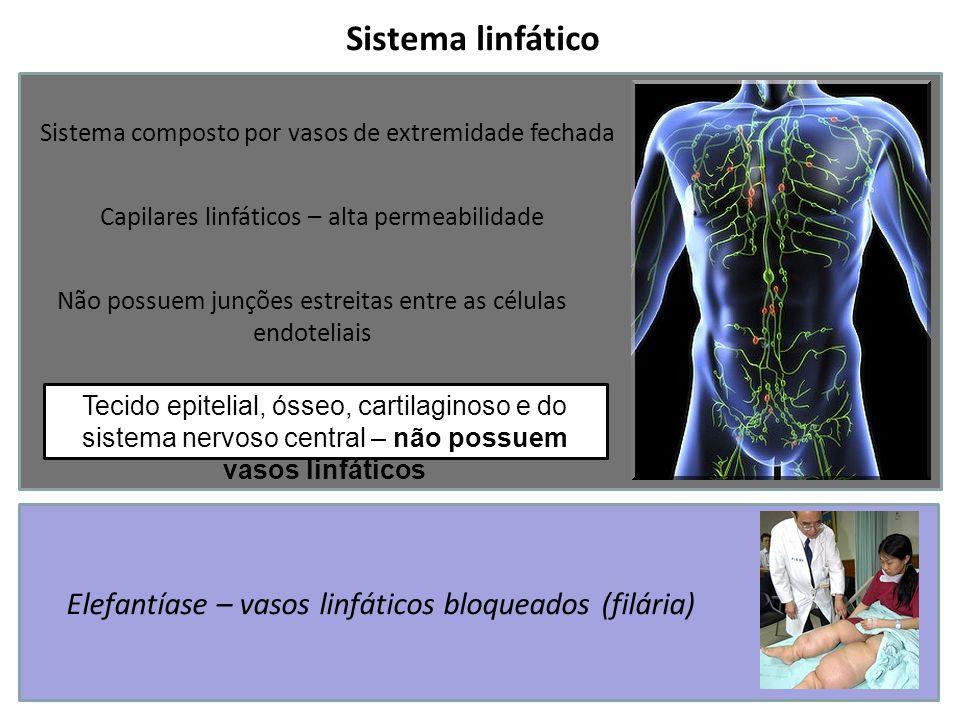 Sistema linfático Sistema composto por vasos de extremidade fechada Capilares linfáticos – alta permeabilidade Não possuem junções estreitas entre as