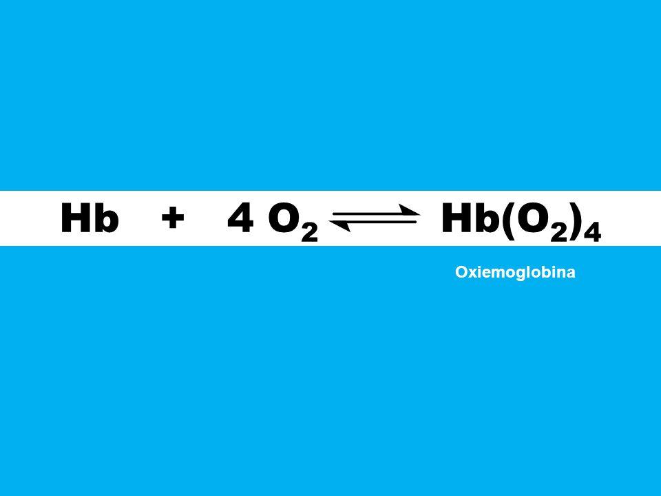 Hb + 4 O 2 Hb(O 2 ) 4 Oxiemoglobina