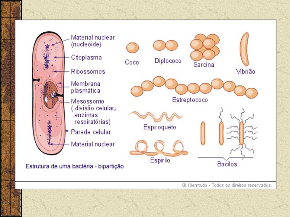 IMPORTÂNCIA DAS BACTÉRIAS: INDÚSTRIA DE LATICÍNIOS: LACTOBACILUS E STREPTOCOCUS BIOTECNOLOGIA: PRODUÇÃO DE METANOL, BUTANOL E ACETONA.