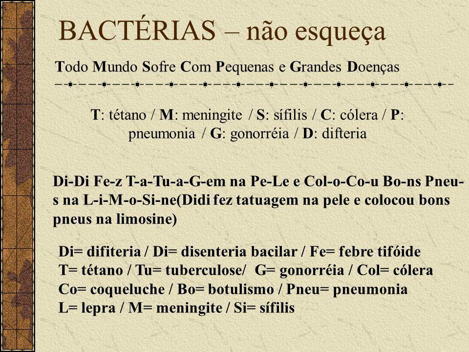 BACTÉRIAS – não esqueça Todo Mundo Sofre Com Pequenas e Grandes Doenças T: tétano / M: meningite / S: sífilis / C: cólera / P: pneumonia / G: gonorréi