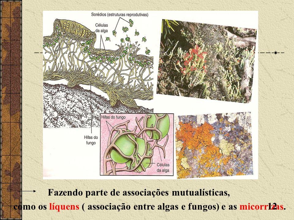 Fazendo parte de associações mutualísticas, como os líquens ( associação entre algas e fungos) e as micorrizas. 12