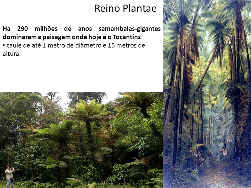 Professor: Thiago Lima Reino Plantae Há 290 milhões de anos samambaias-gigantes dominaram a paisagem onde hoje é o Tocantins caule de até 1 metro de d