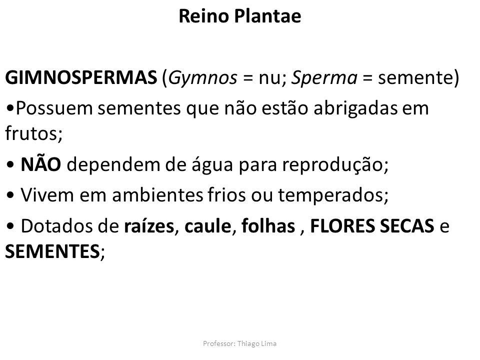 Professor: Thiago Lima Reino Plantae GIMNOSPERMAS (Gymnos = nu; Sperma = semente) Possuem sementes que não estão abrigadas em frutos; NÃO dependem de