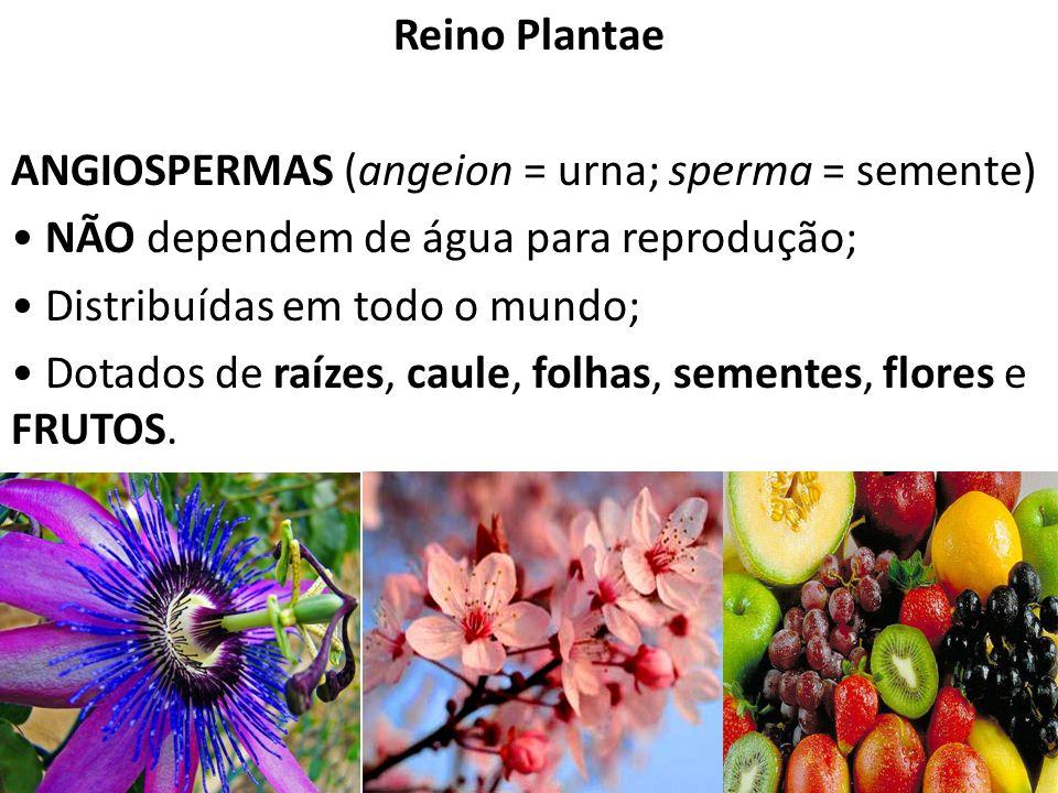 Professor: Thiago Lima Reino Plantae ANGIOSPERMAS (angeion = urna; sperma = semente) NÃO dependem de água para reprodução; Distribuídas em todo o mund
