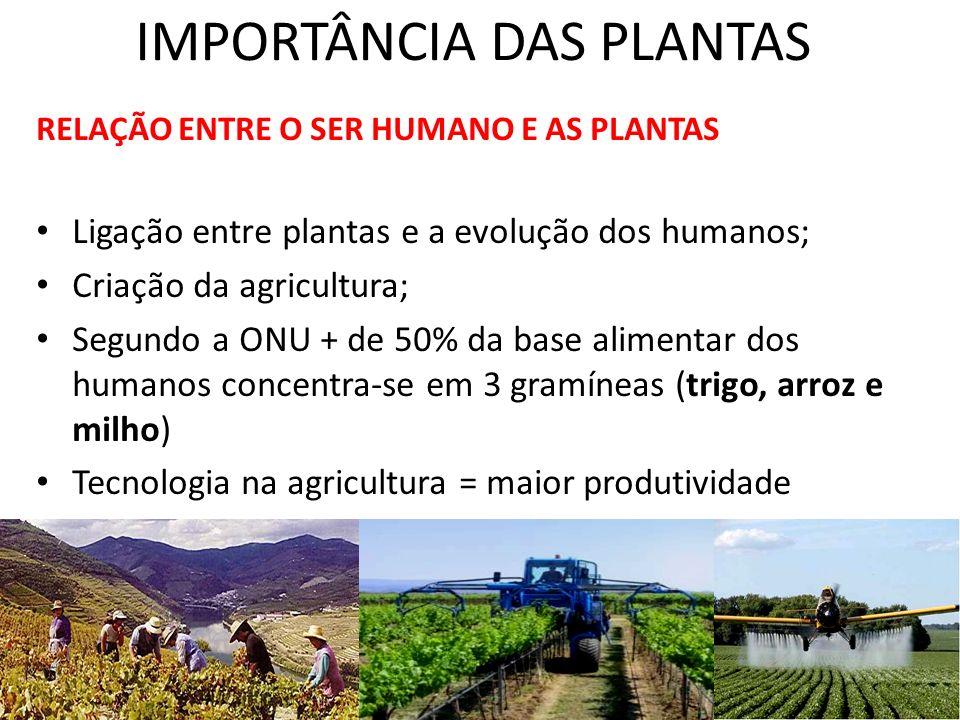 IMPORTÂNCIA DAS PLANTAS RELAÇÃO ENTRE O SER HUMANO E AS PLANTAS Ligação entre plantas e a evolução dos humanos; Criação da agricultura; Segundo a ONU