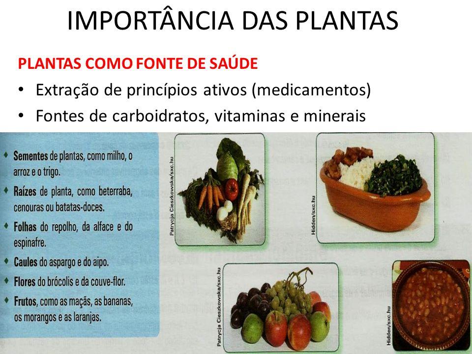 IMPORTÂNCIA DAS PLANTAS PLANTAS COMO FONTE DE SAÚDE Extração de princípios ativos (medicamentos) Fontes de carboidratos, vitaminas e minerais