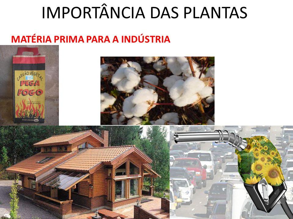 IMPORTÂNCIA DAS PLANTAS MATÉRIA PRIMA PARA A INDÚSTRIA