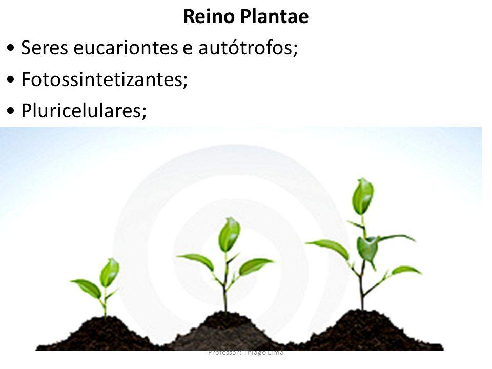 Professor: Thiago Lima Reino Plantae Seres eucariontes e autótrofos; Fotossintetizantes; Pluricelulares;