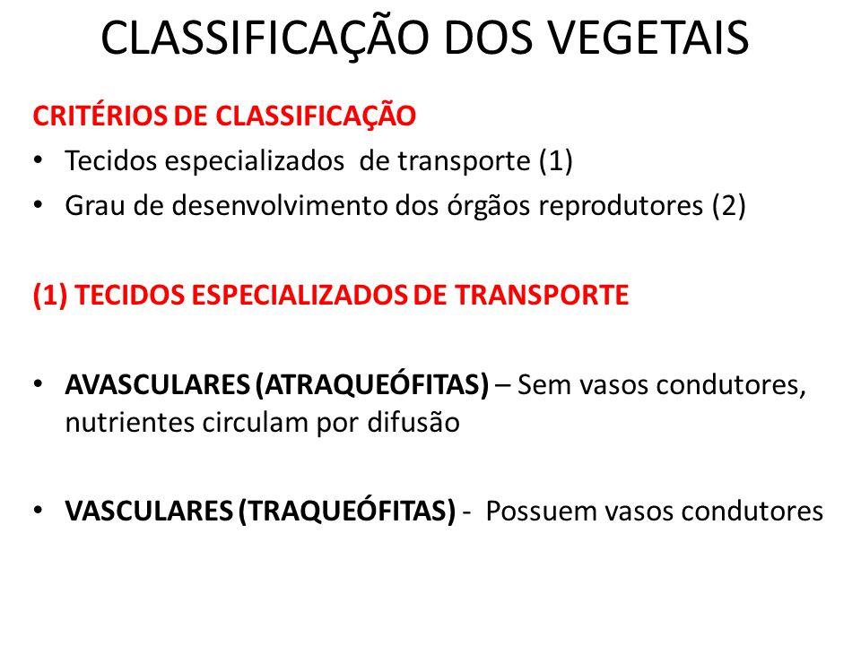 CLASSIFICAÇÃO DOS VEGETAIS CRITÉRIOS DE CLASSIFICAÇÃO Tecidos especializados de transporte (1) Grau de desenvolvimento dos órgãos reprodutores (2) (1)