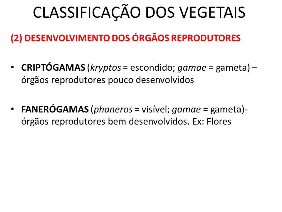 CLASSIFICAÇÃO DOS VEGETAIS (2) DESENVOLVIMENTO DOS ÓRGÃOS REPRODUTORES CRIPTÓGAMAS (kryptos = escondido; gamae = gameta) – órgãos reprodutores pouco d