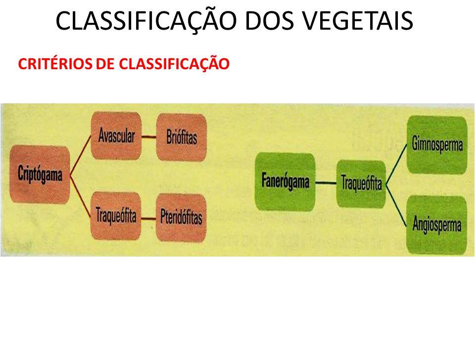 CLASSIFICAÇÃO DOS VEGETAIS CRITÉRIOS DE CLASSIFICAÇÃO