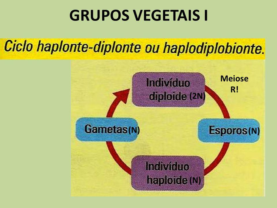 GRUPOS VEGETAIS I (N) (2N) (N) Meiose R!
