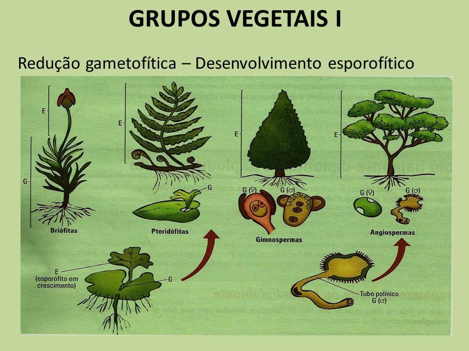 GRUPOS VEGETAIS I Redução gametofítica – Desenvolvimento esporofítico