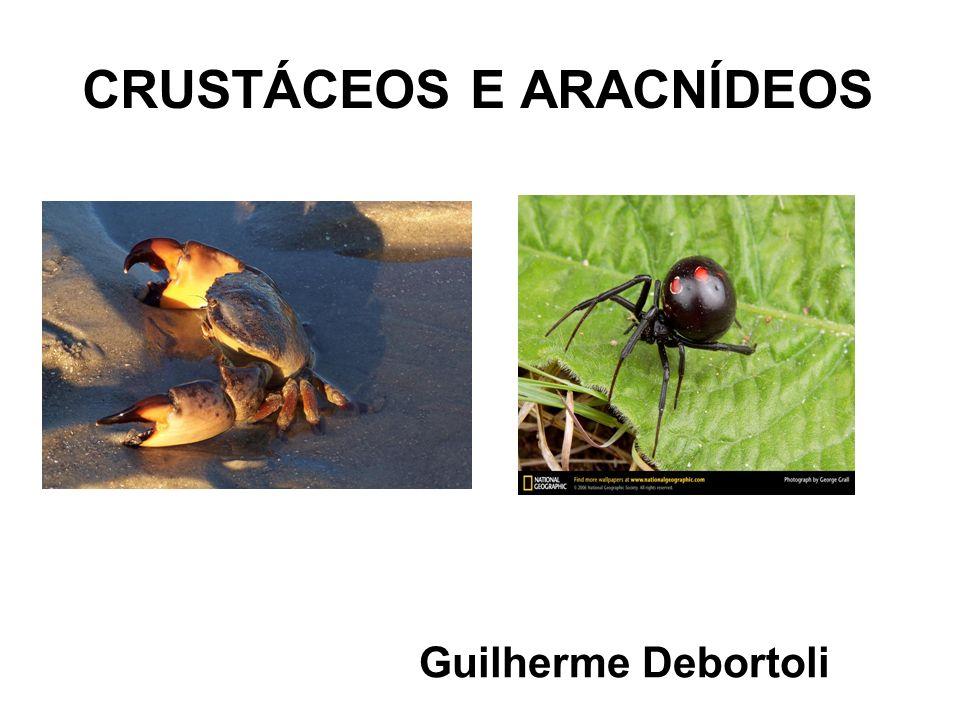 CRUSTÁCEOS - Animais aquáticos, exceto os tatuzinhos de jardim (aprox.