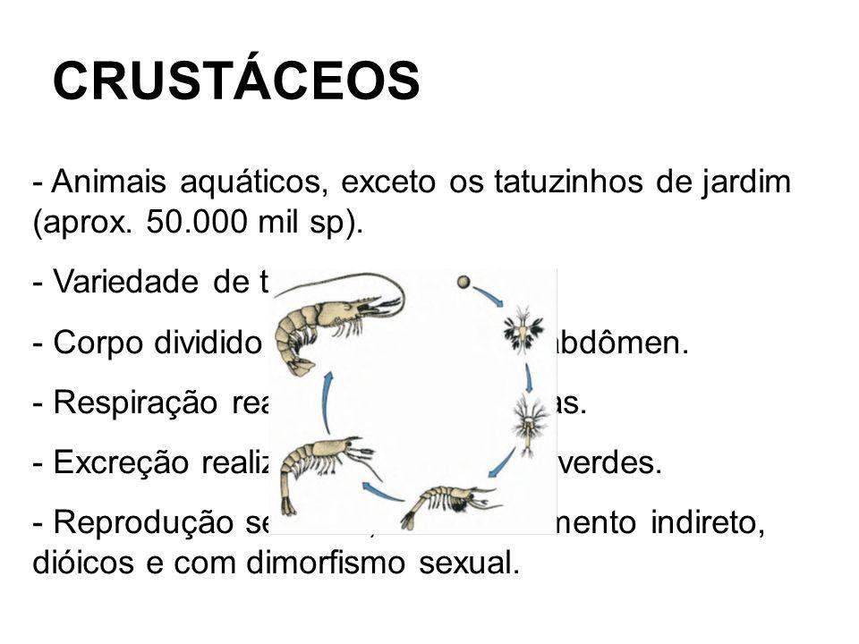 - Podem ser classificados em 3 diferentes tipos: - Copépodes – Microscópicos (Cyclops e Daphnia) - Isópodes – Vários pares de patas (Tatuzinho de jardim) - Decápodes – 5 pares de patas (Siri, caranguejo, camarão)