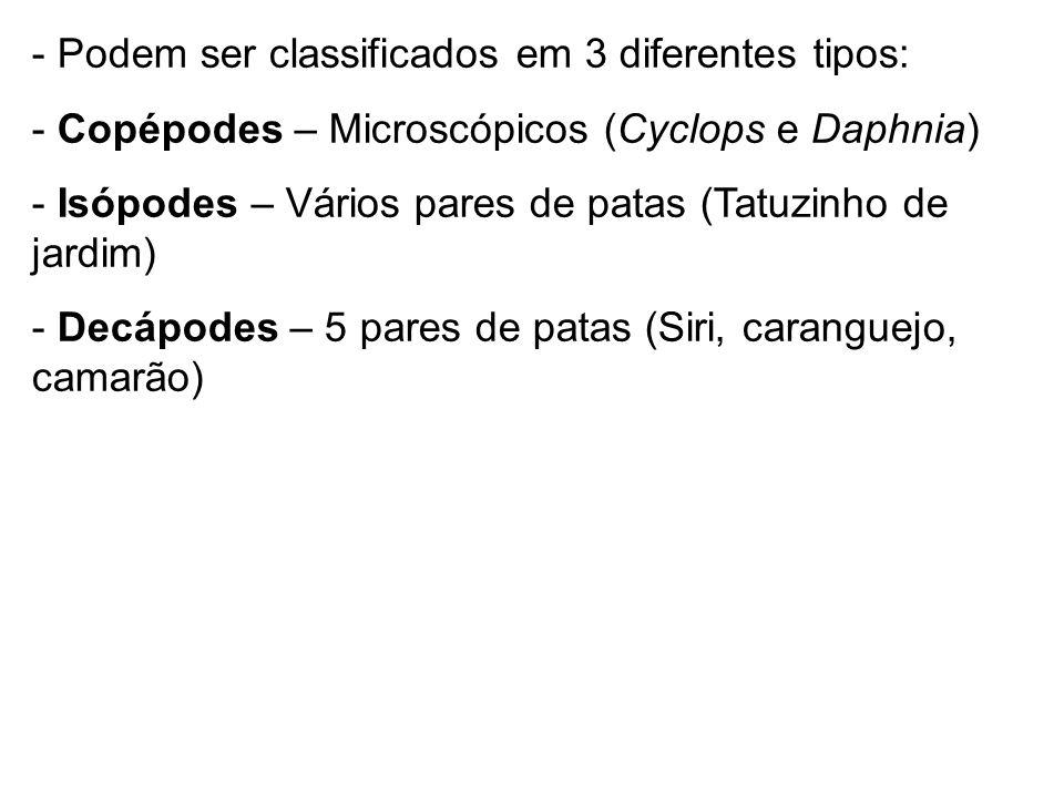 - Podem ser classificados em 3 diferentes tipos: - Copépodes – Microscópicos (Cyclops e Daphnia) - Isópodes – Vários pares de patas (Tatuzinho de jard
