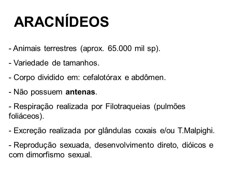ARACNÍDEOS - Animais terrestres (aprox. 65.000 mil sp). - Variedade de tamanhos. - Corpo dividido em: cefalotórax e abdômen. - Não possuem antenas. -