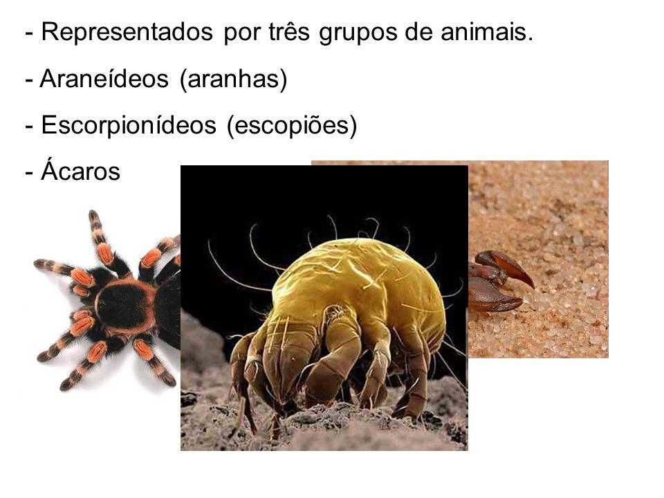 - Representados por três grupos de animais. - Araneídeos (aranhas) - Escorpionídeos (escopiões) - Ácaros