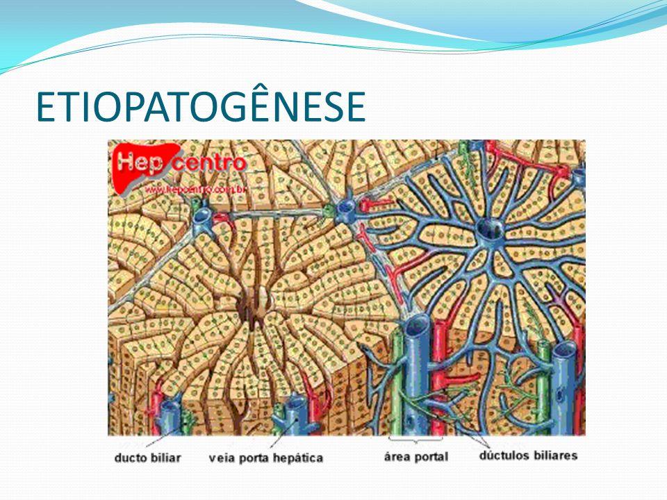Circulação entero-hepática dos sais biliares: