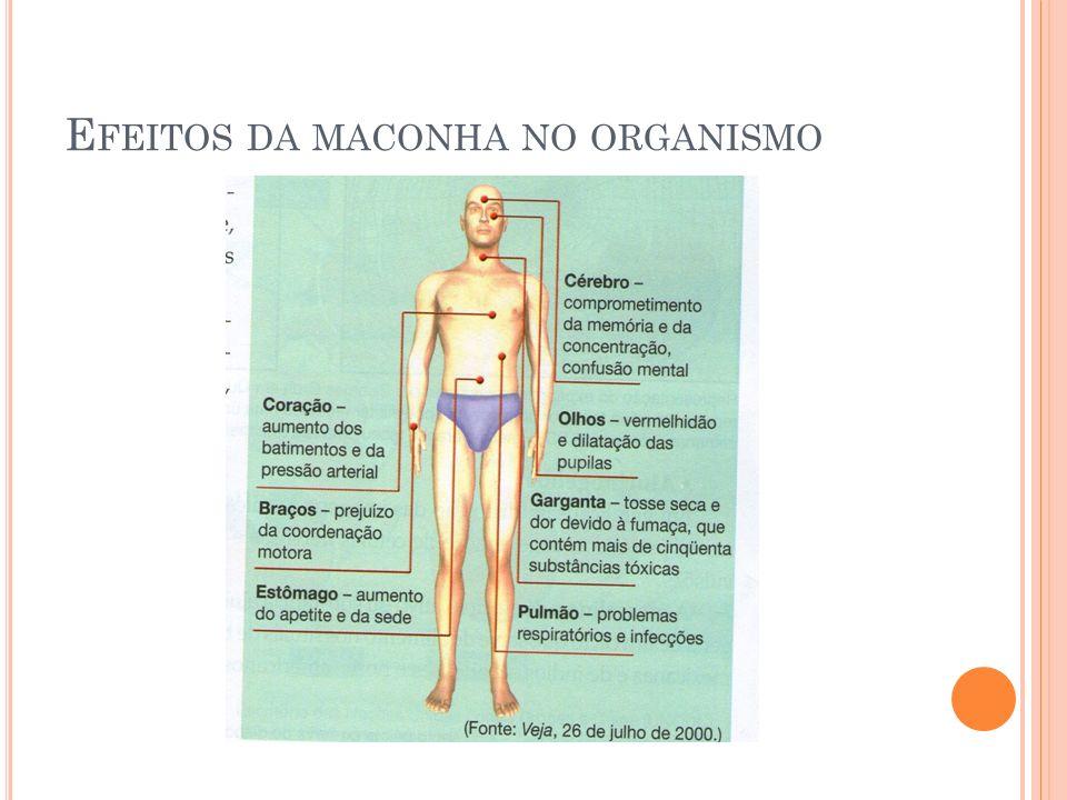 E FEITOS DA MACONHA NO ORGANISMO