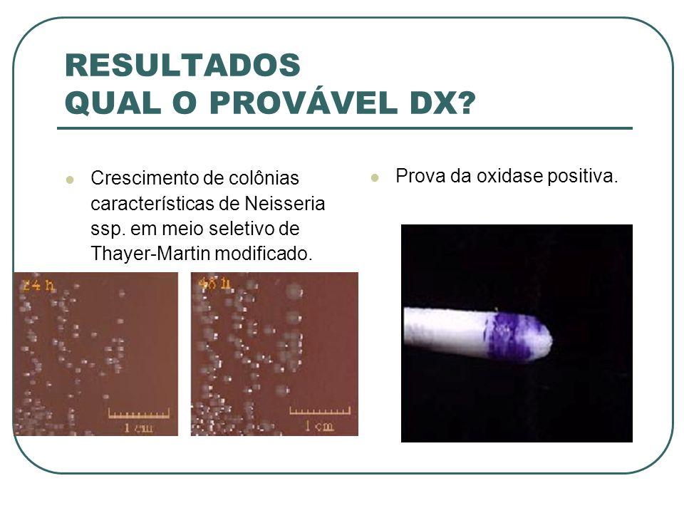 RESULTADOS QUAL O PROVÁVEL DX? Crescimento de colônias características de Neisseria ssp. em meio seletivo de Thayer-Martin modificado. Prova da oxidas