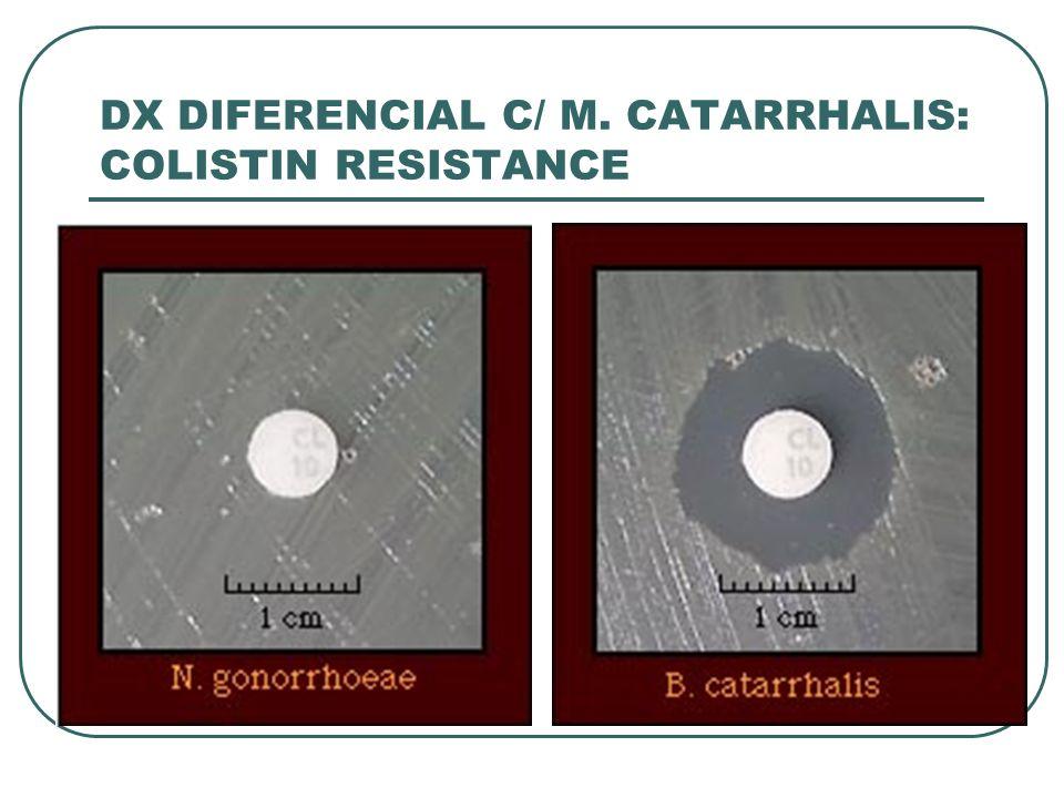 DX DIFERENCIAL C/ M. CATARRHALIS: COLISTIN RESISTANCE