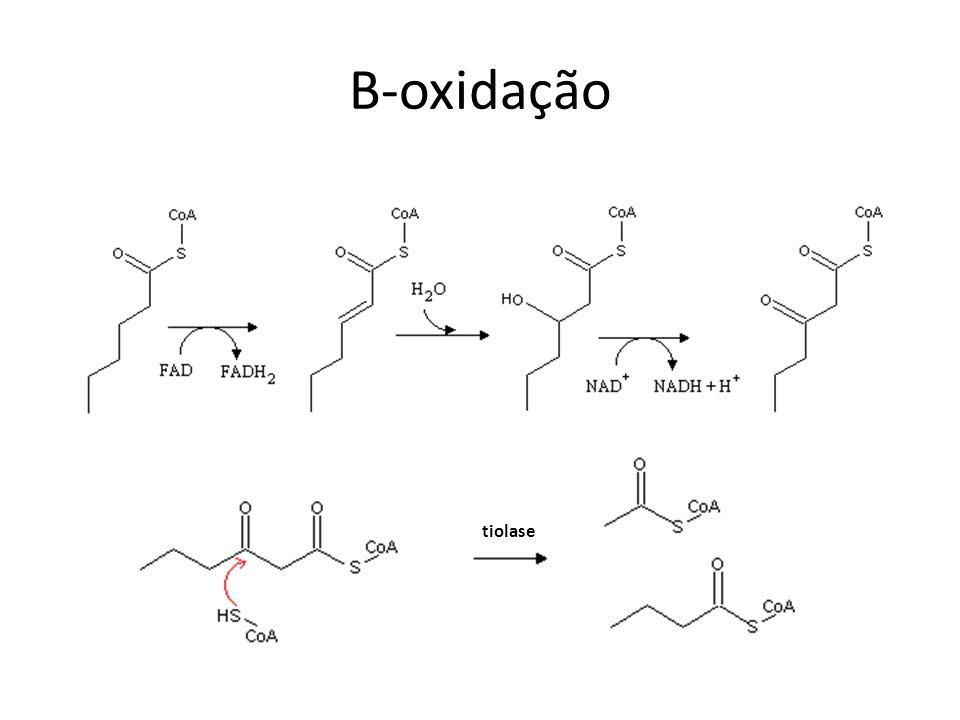 B-oxidação tiolase