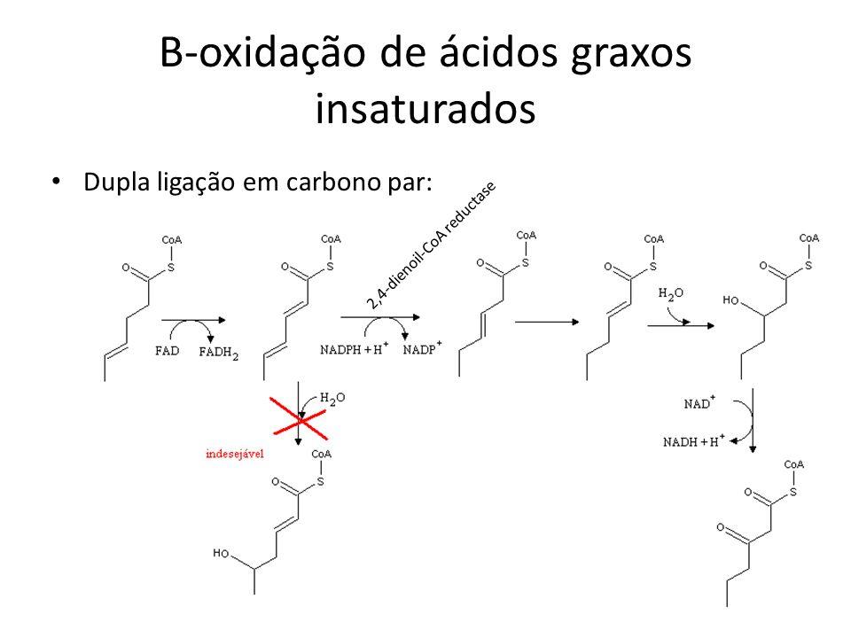 B-oxidação de ácidos graxos insaturados Dupla ligação em carbono par: 2,4-dienoil-CoA reductase