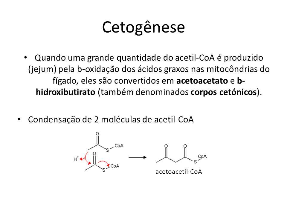 Cetogênese Quando uma grande quantidade do acetil-CoA é produzido (jejum) pela b-oxidação dos ácidos graxos nas mitocôndrias do fígado, eles são conve