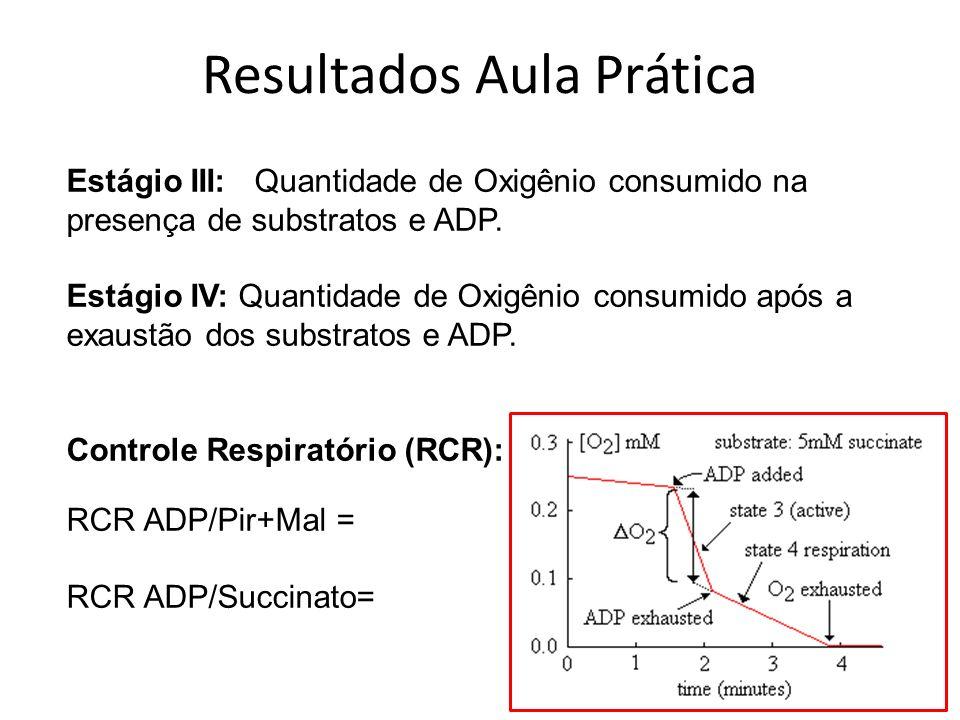 Estágio III: Quantidade de Oxigênio consumido na presença de substratos e ADP. Estágio IV: Quantidade de Oxigênio consumido após a exaustão dos substr