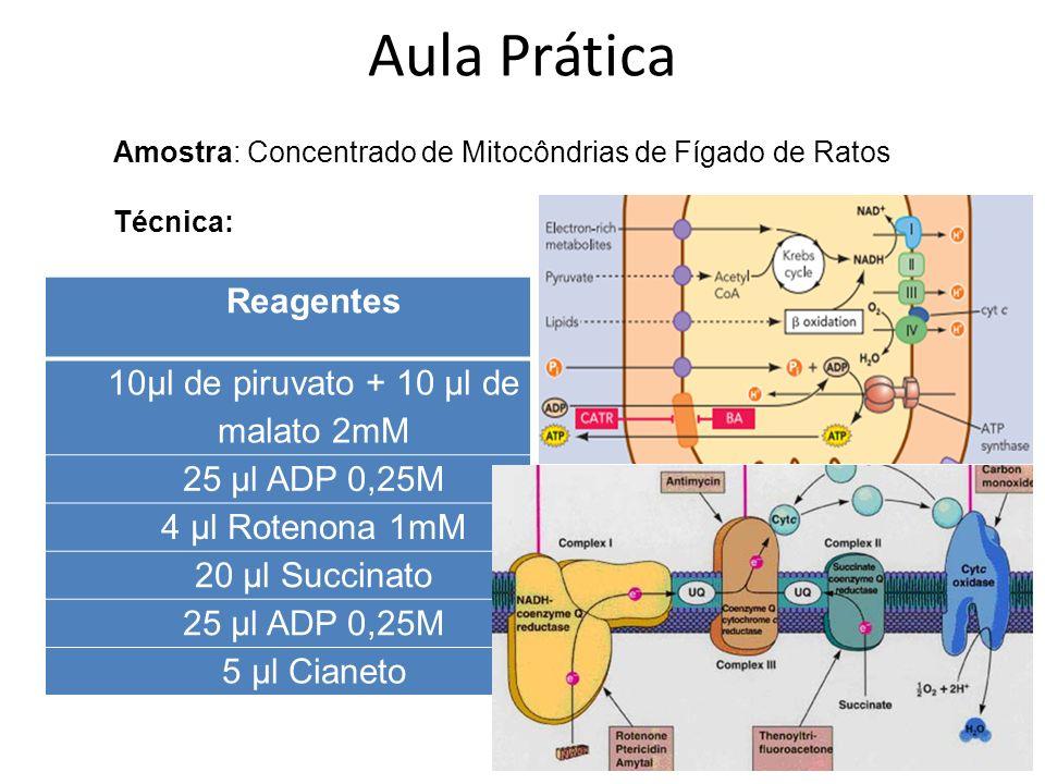 Reagentes Consumo de Oxigênio (Marks Statistics) 10µl de piruvato + 10 µl de malato 2mM 25 µl ADP 0,25M 4 µl Rotenona 1mM 20 µl Succinato 25 µl ADP 0,25M 5 µl Citocromo C Resultados Aula Prática