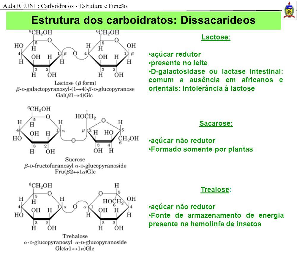 Lactose: açúcar redutor presente no leite D-galactosidase ou lactase intestinal: comum a ausência em africanos e orientais: Intolerância à lactose Sac