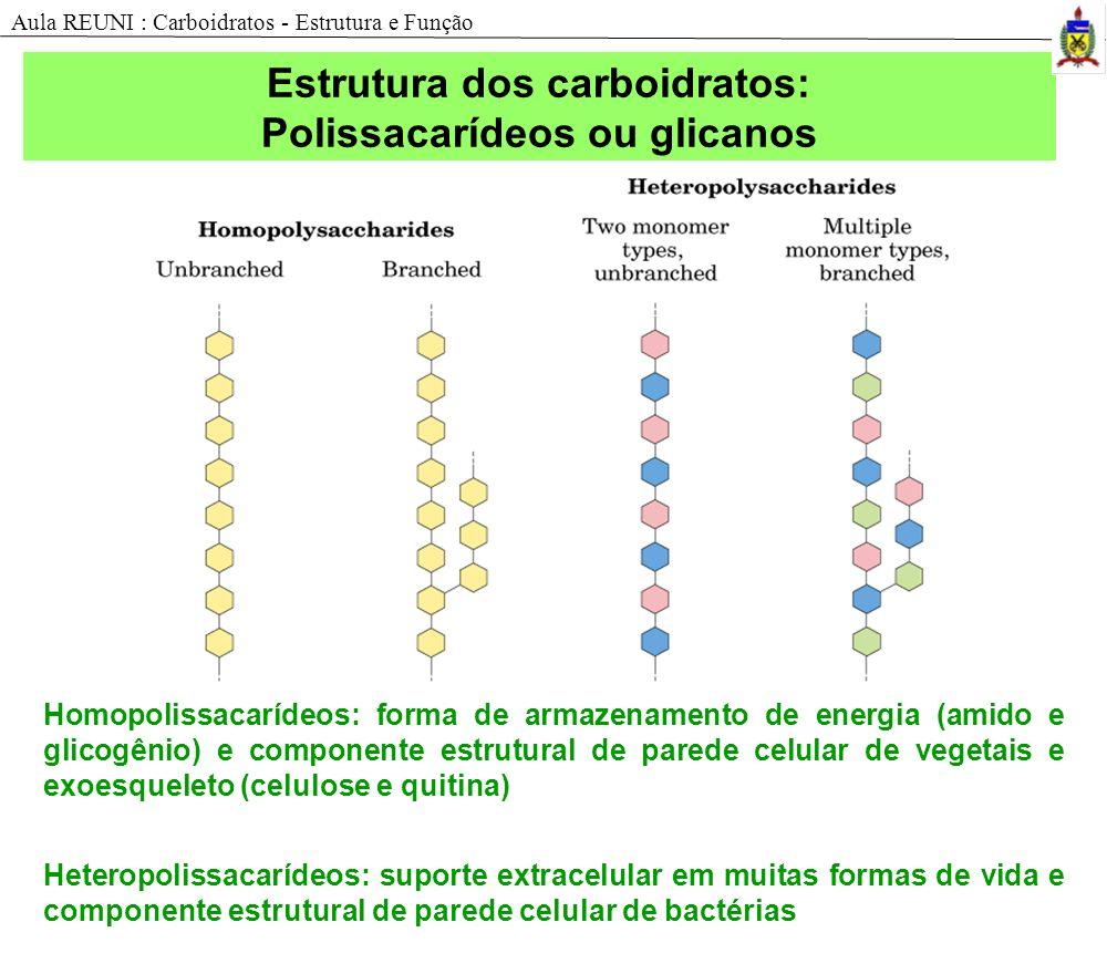 Homopolissacarídeos: forma de armazenamento de energia (amido e glicogênio) e componente estrutural de parede celular de vegetais e exoesqueleto (celulose e quitina) Heteropolissacarídeos: suporte extracelular em muitas formas de vida e componente estrutural de parede celular de bactérias Estrutura dos carboidratos: Polissacarídeos ou glicanos Aula REUNI : Carboidratos - Estrutura e Função