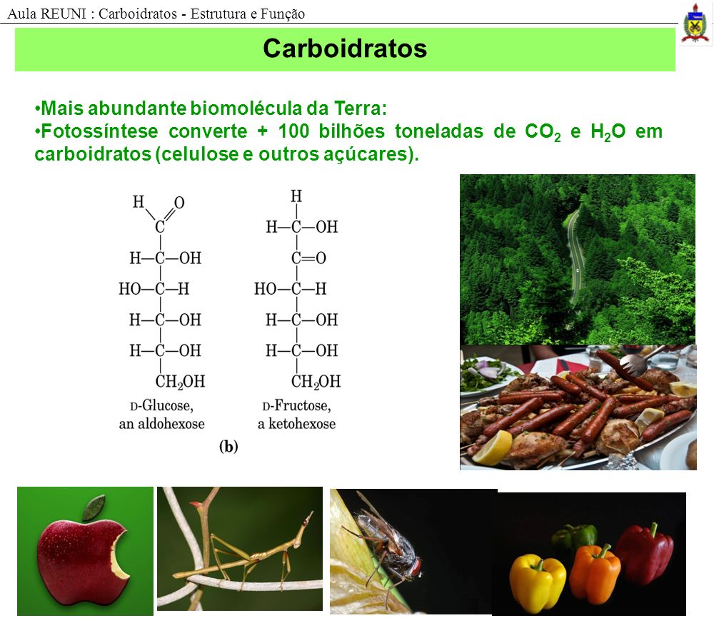 Funções dos carboidratos Reconhecimento celular; Adesão celular; Estrutura celular : Peptídeosglicanos, Proteoglicanos, quitina e celulose; Reserva energética: glicose, amido, glicogênio; Aula REUNI : Carboidratos - Estrutura e Função