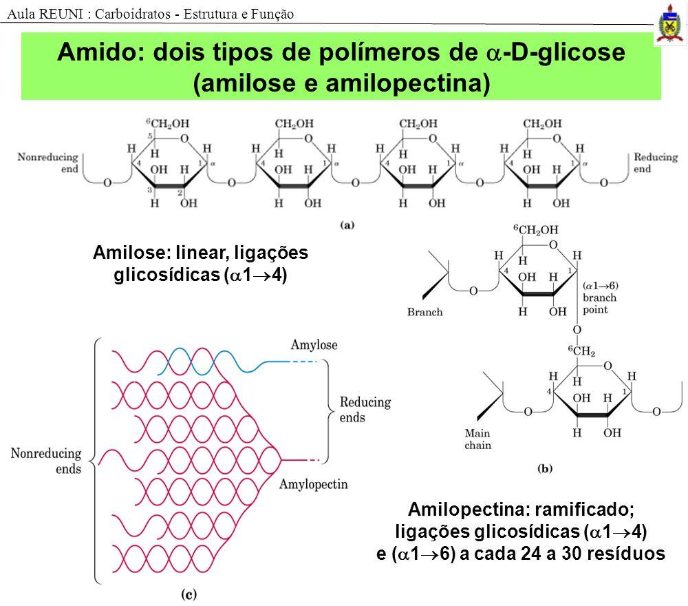 Amilose: linear, ligações glicosídicas ( 1 4) Amilopectina: ramificado; ligações glicosídicas ( 1 4) e ( 1 6) a cada 24 a 30 resíduos Amido: dois tipo