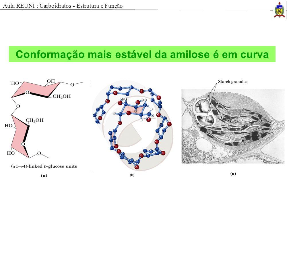 Conformação mais estável da amilose é em curva Aula REUNI : Carboidratos - Estrutura e Função