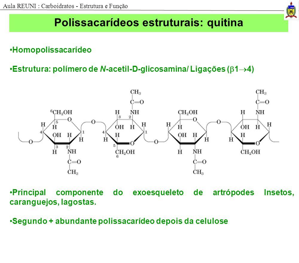 Homopolissacarídeo Estrutura: polímero de N-acetil-D-glicosamina/ Ligações ( 1 4) Principal componente do exoesqueleto de artrópodes Insetos, carangue