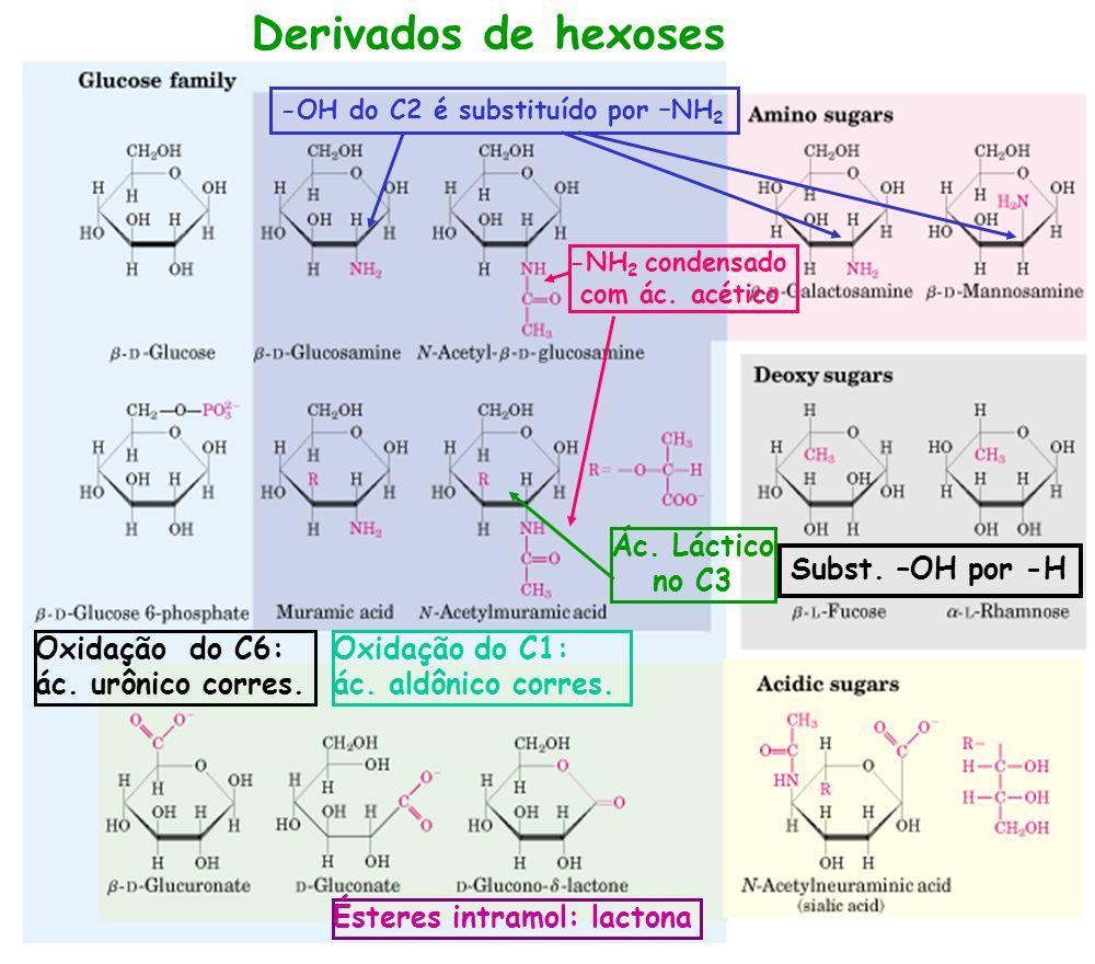 Derivados de hexoses -OH do C2 é substituído por –NH 2 -NH 2 condensado com ác. acético Ác. Láctico no C3 Subst. –OH por -H Oxidação do C6: ác. urônic